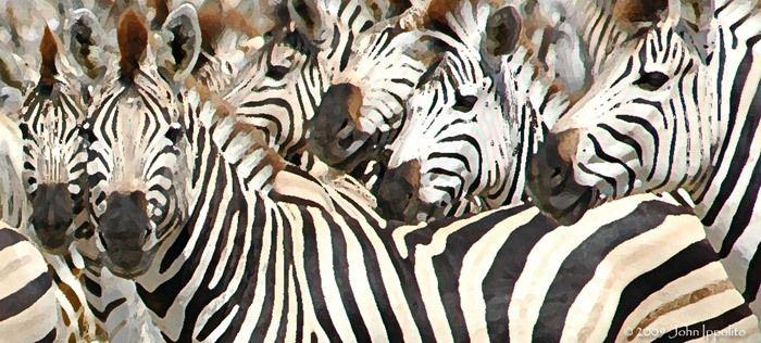 Kalahari Stripes