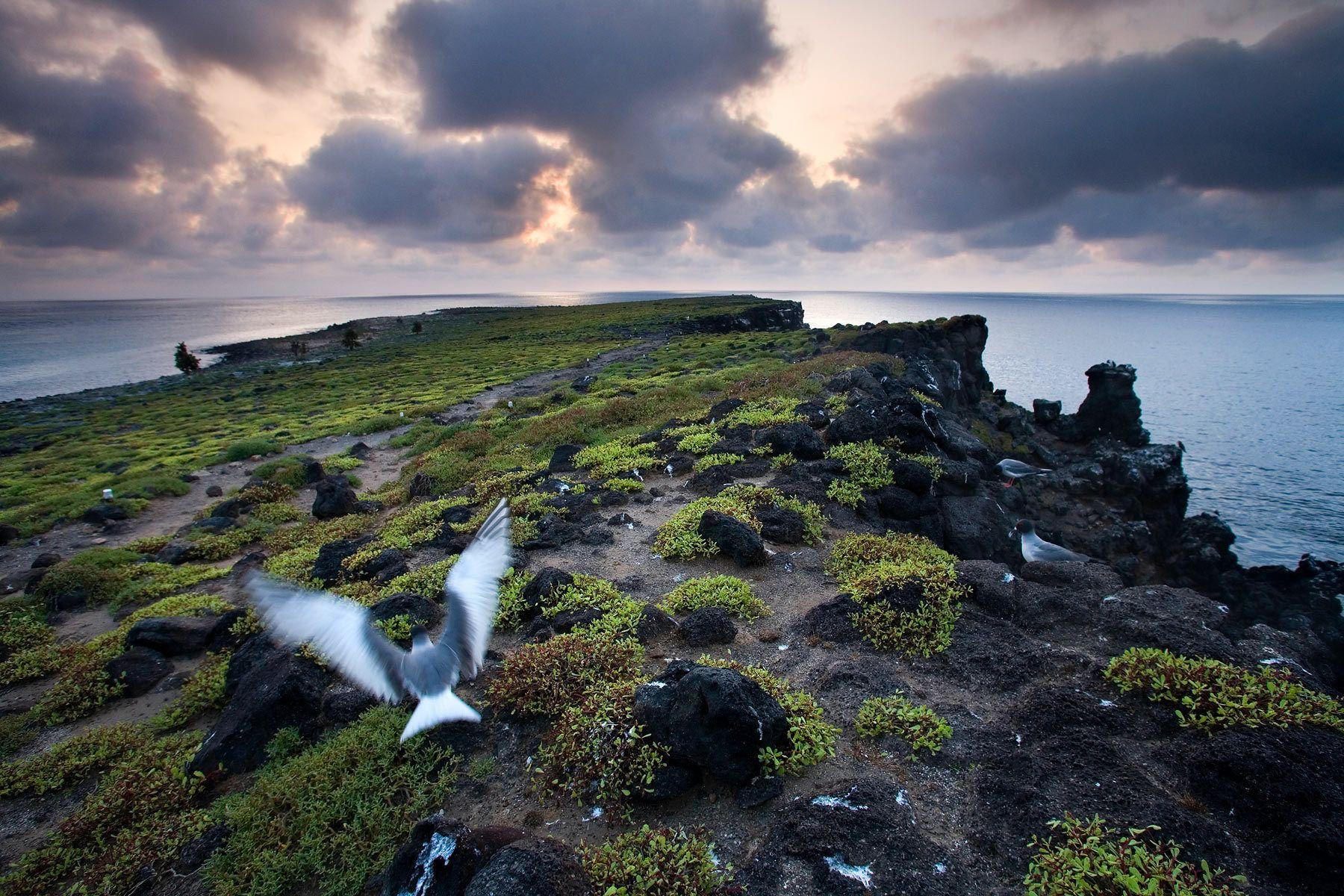 South Plaza Island, Galapagos
