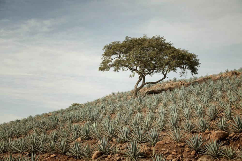 TequilaBook21.jpg