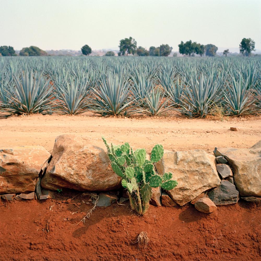 TequilaBookFINALS15.jpg