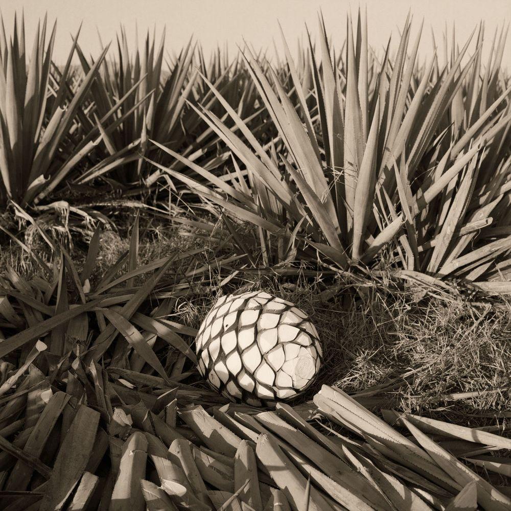 Tequila34.jpg