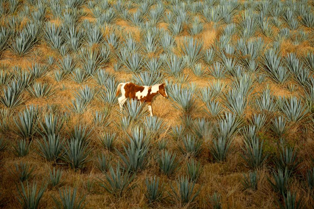 Tequila15.jpg