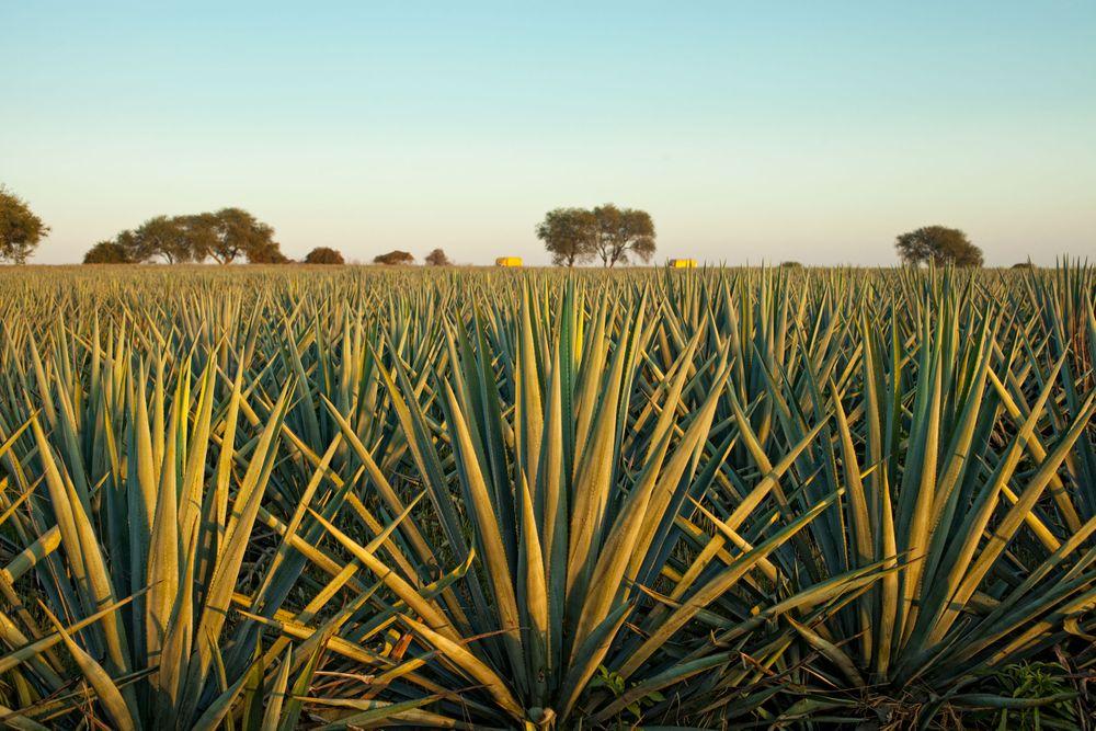 Tequila08.jpg