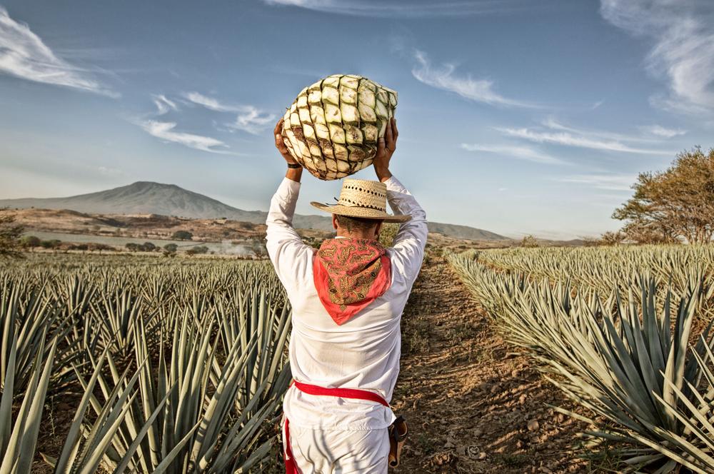 Tequila13.jpg