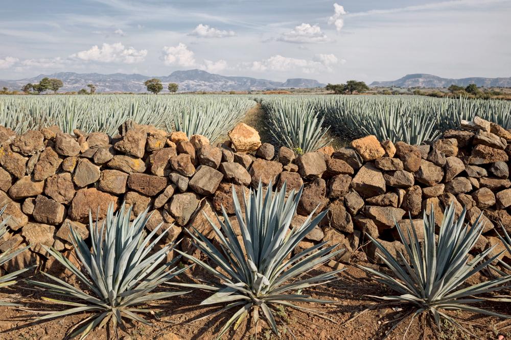 TequilaBook43.jpg