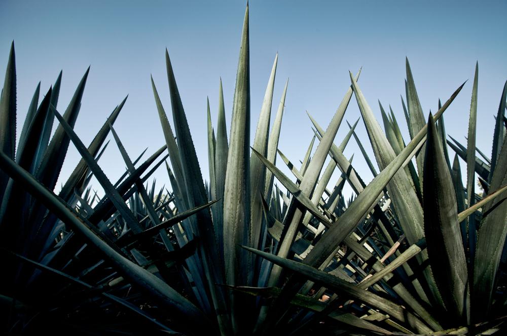 Tequila06.jpg