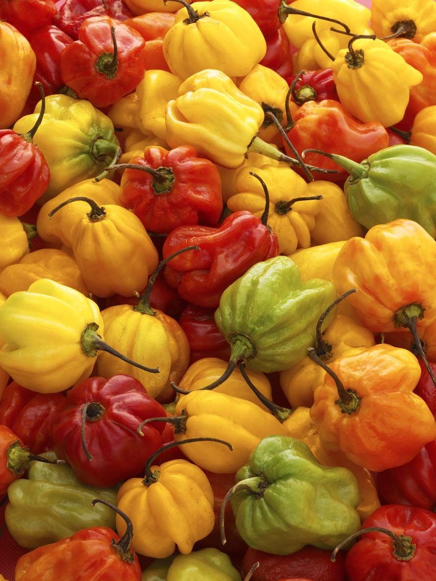 Scotch Bonnet Peppers.