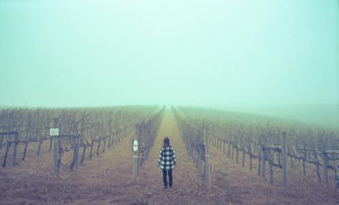 24_1napa_fog_2.jpg