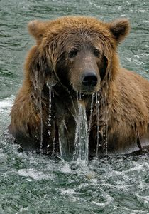 Bear Portrait 3-close.jpg