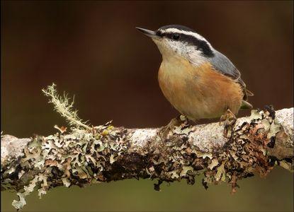 3-21 Bird Comp 2.jpg