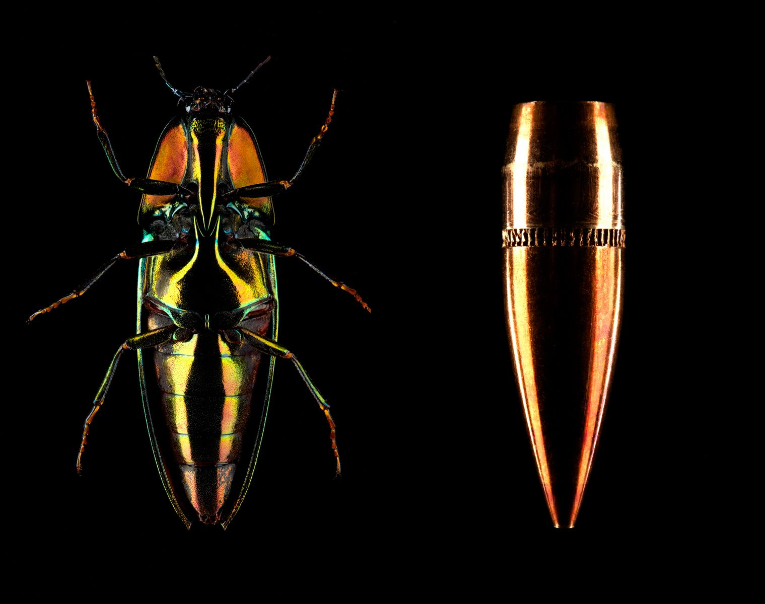 1bullet_beetle_hudson_cuneo_photography_still_life_beauty_san_francisco_makeup_cosmetics.jpg