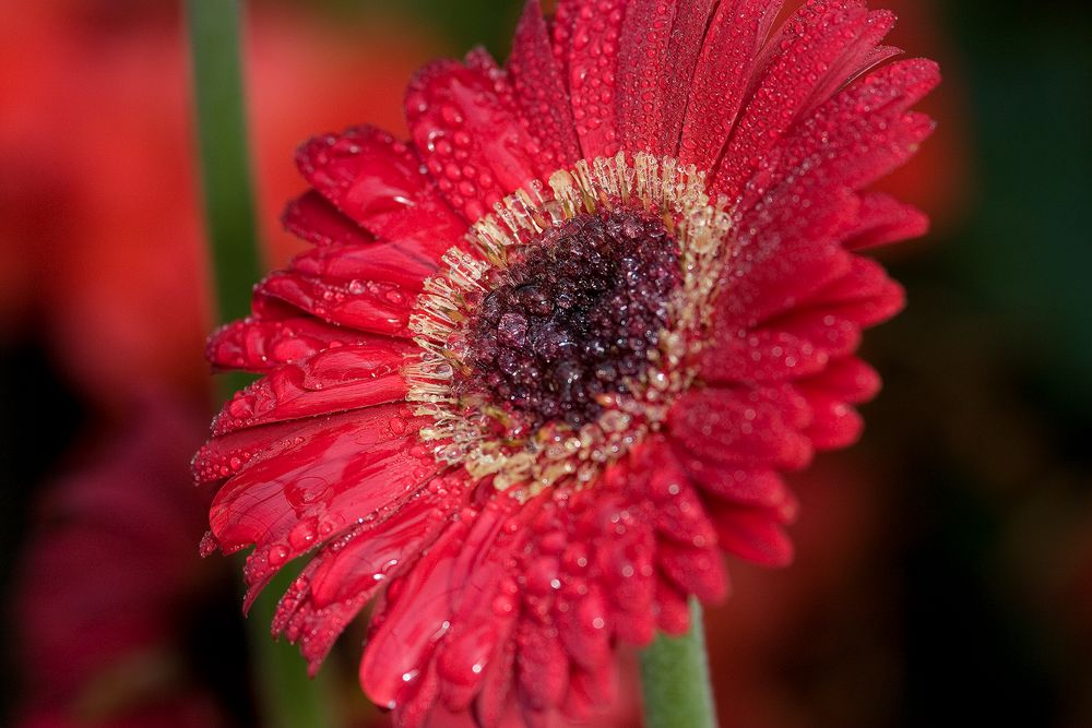1sunny_flower.jpg