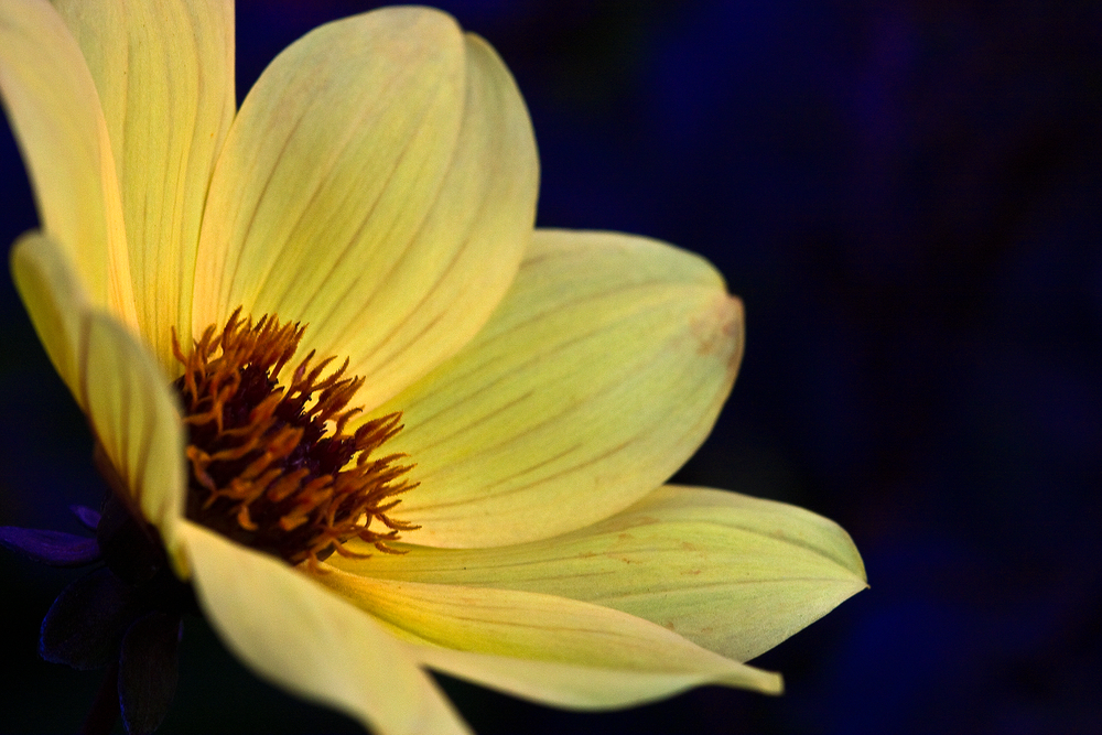 1idaho_falls_flower_2_large.jpg