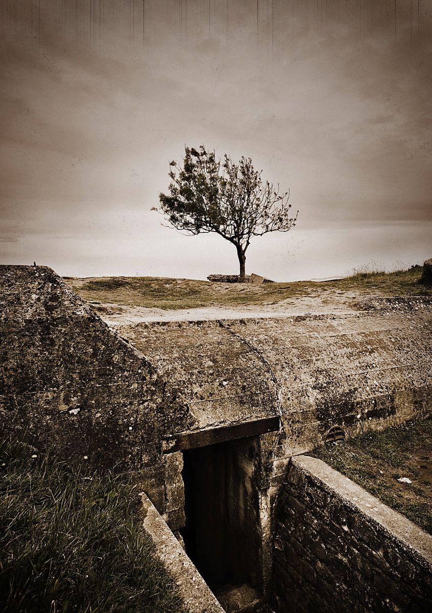 1pointe_du_hoc_tree.jpg