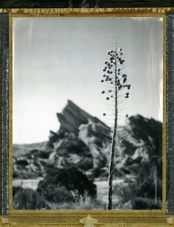 Yucca, VasquezRocks