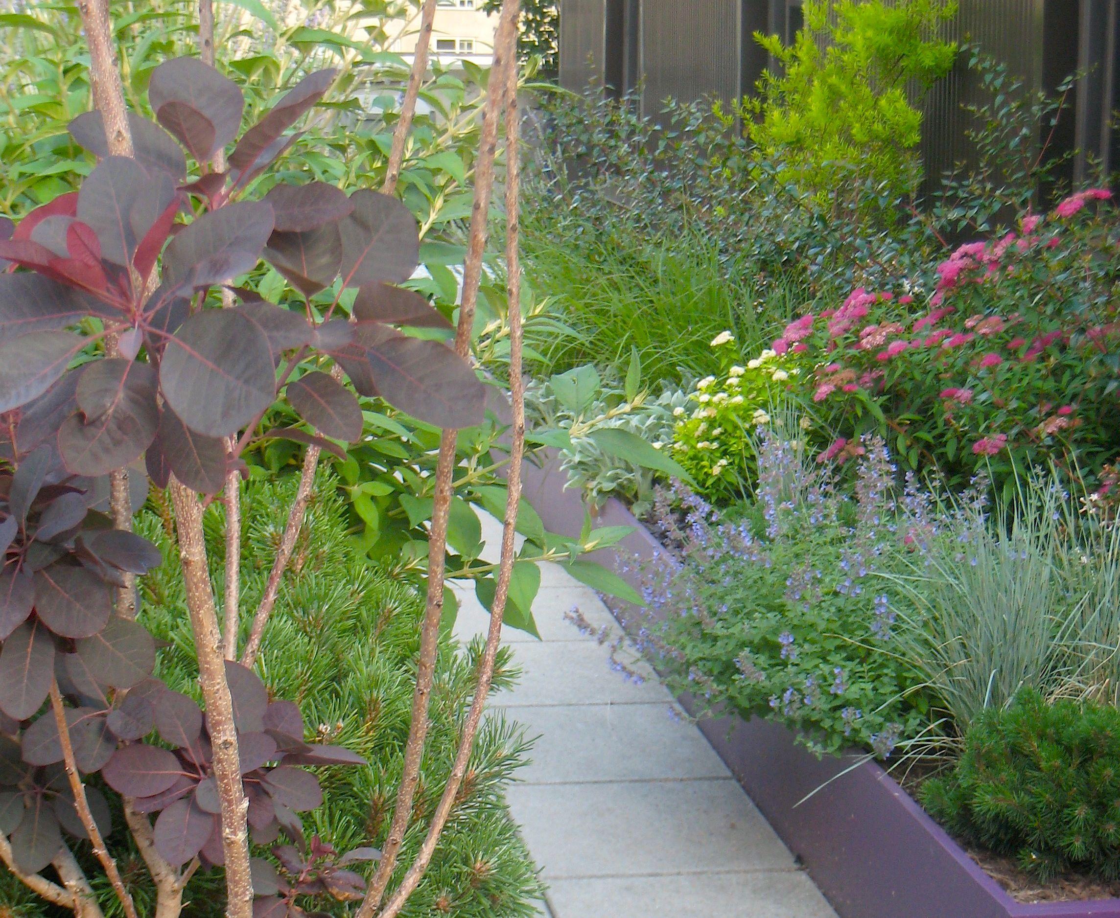 prokesch plants.jpg