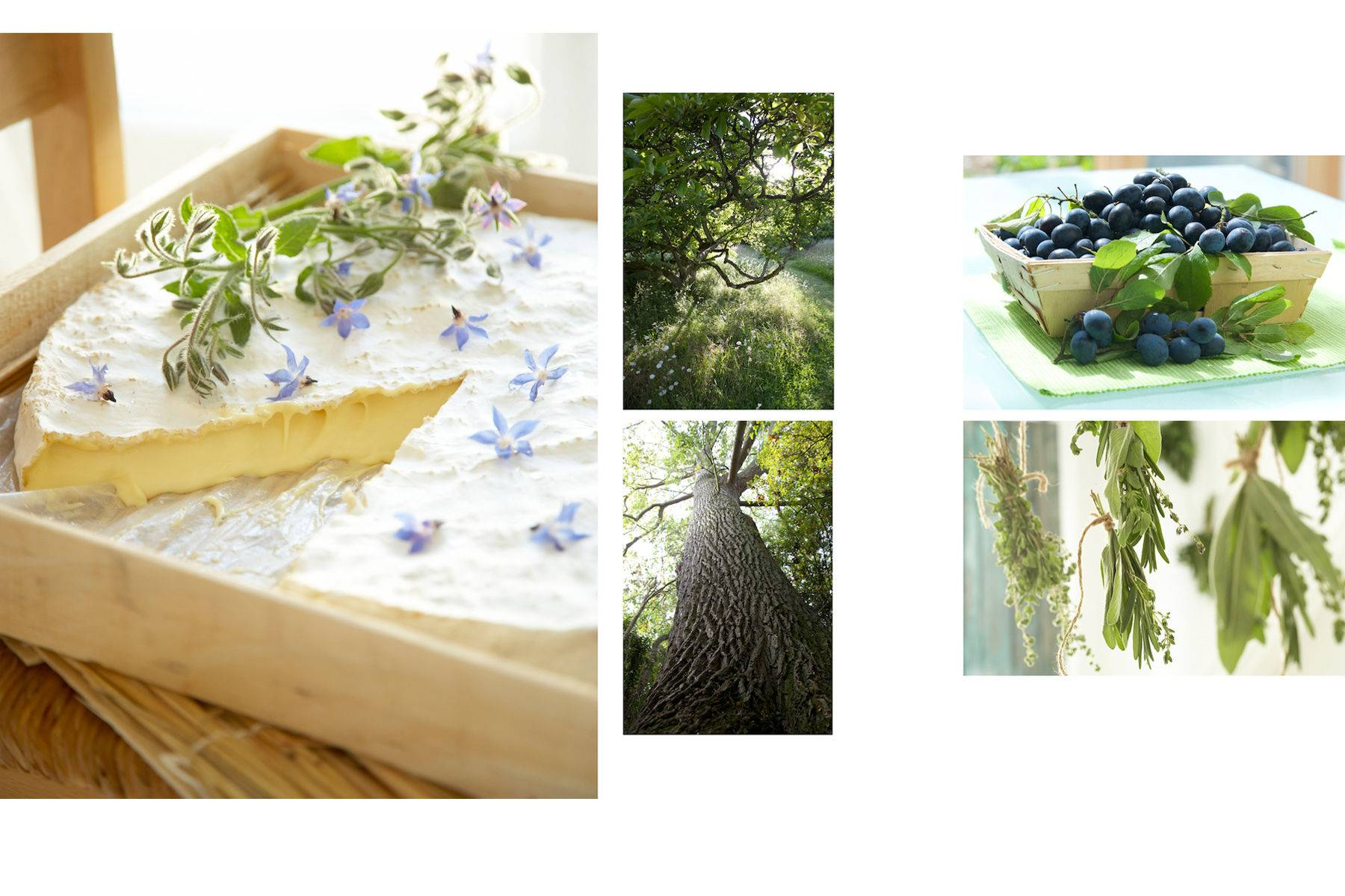 1big_tree.jpg