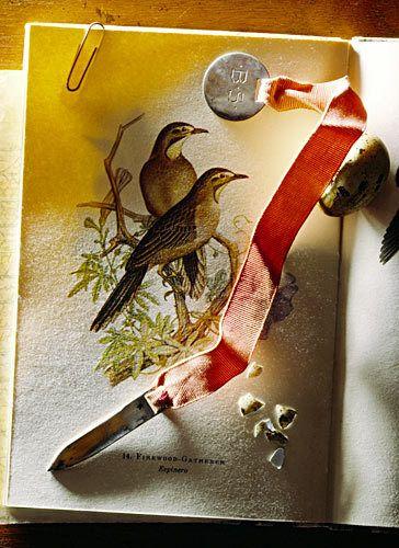 1birdbook.jpg