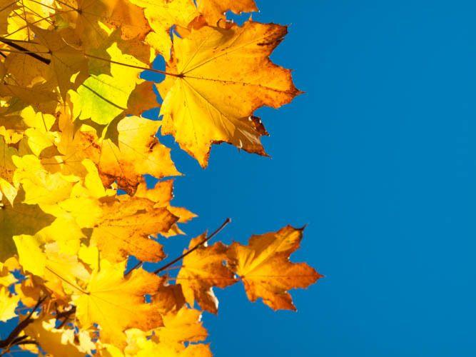 1r2009_autumn_leaves_g10_IMG_3331.jpg