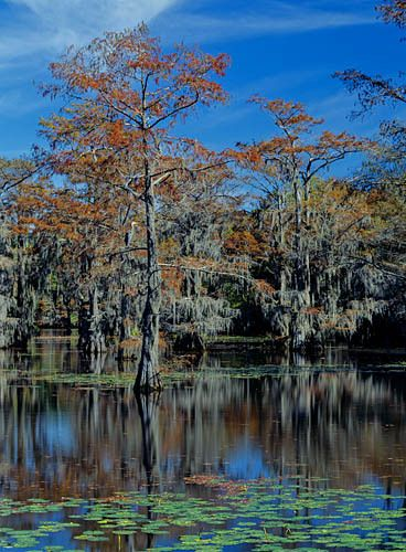 Caddo Lake 5