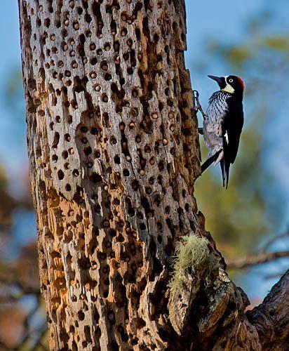1woodpecker_1_2_srgb.jpg