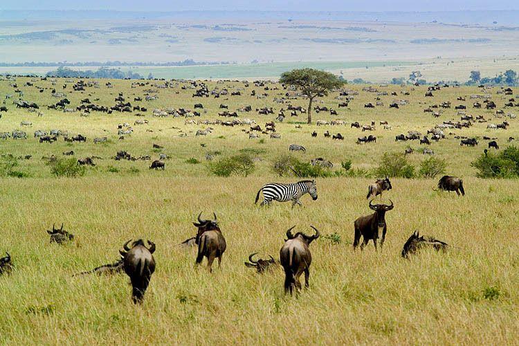 Herds 1