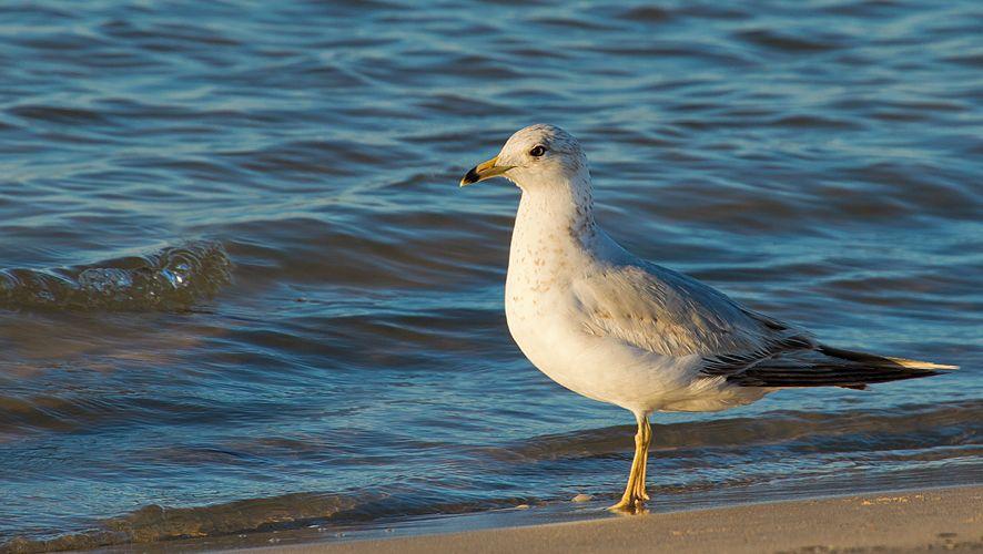 Gull 2.2 sRGB.jpg