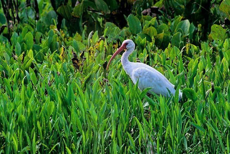 Shore Bird 2