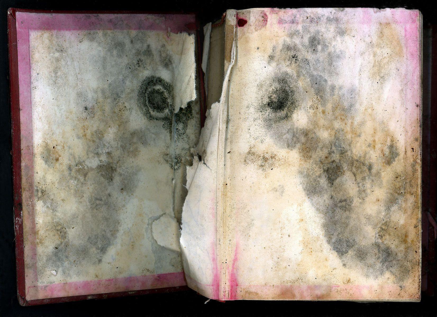 Bulls-eye Bible