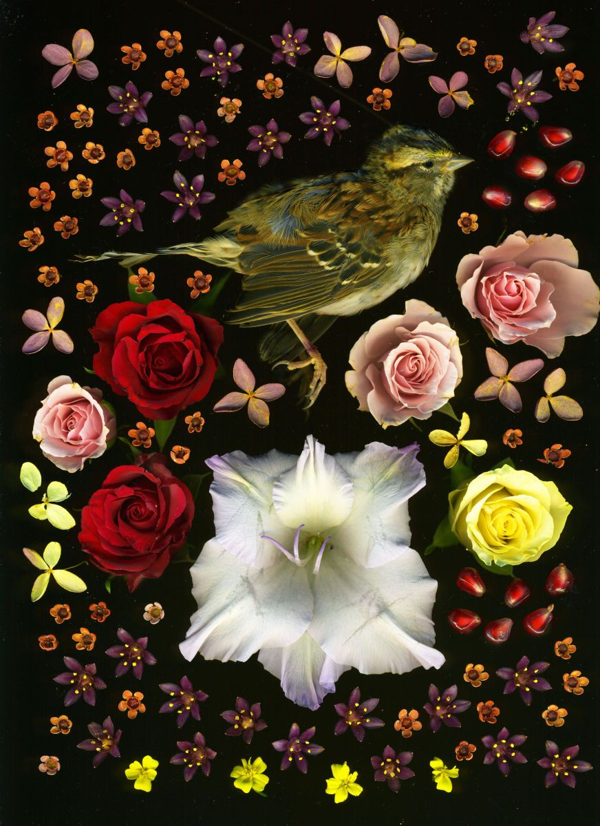 warbler with roses