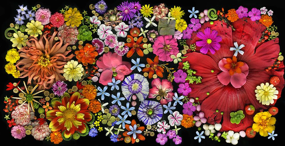 1lo_resfloral_mashup_horizontal_enhanced