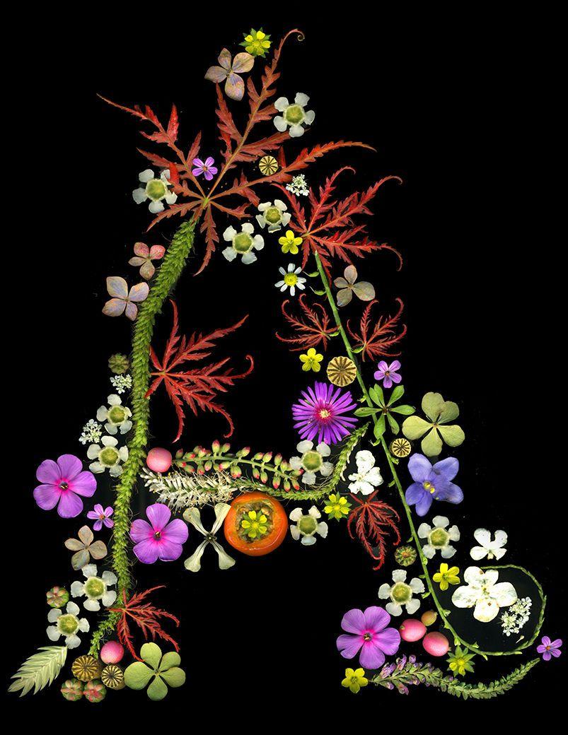 1letter_a_botanical_crop_lo_res