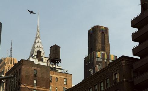 City Scape, Bird in flight, Chrysler BuildingNew York, NY