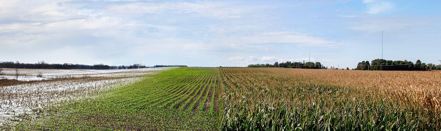 farm4livebooks.jpg