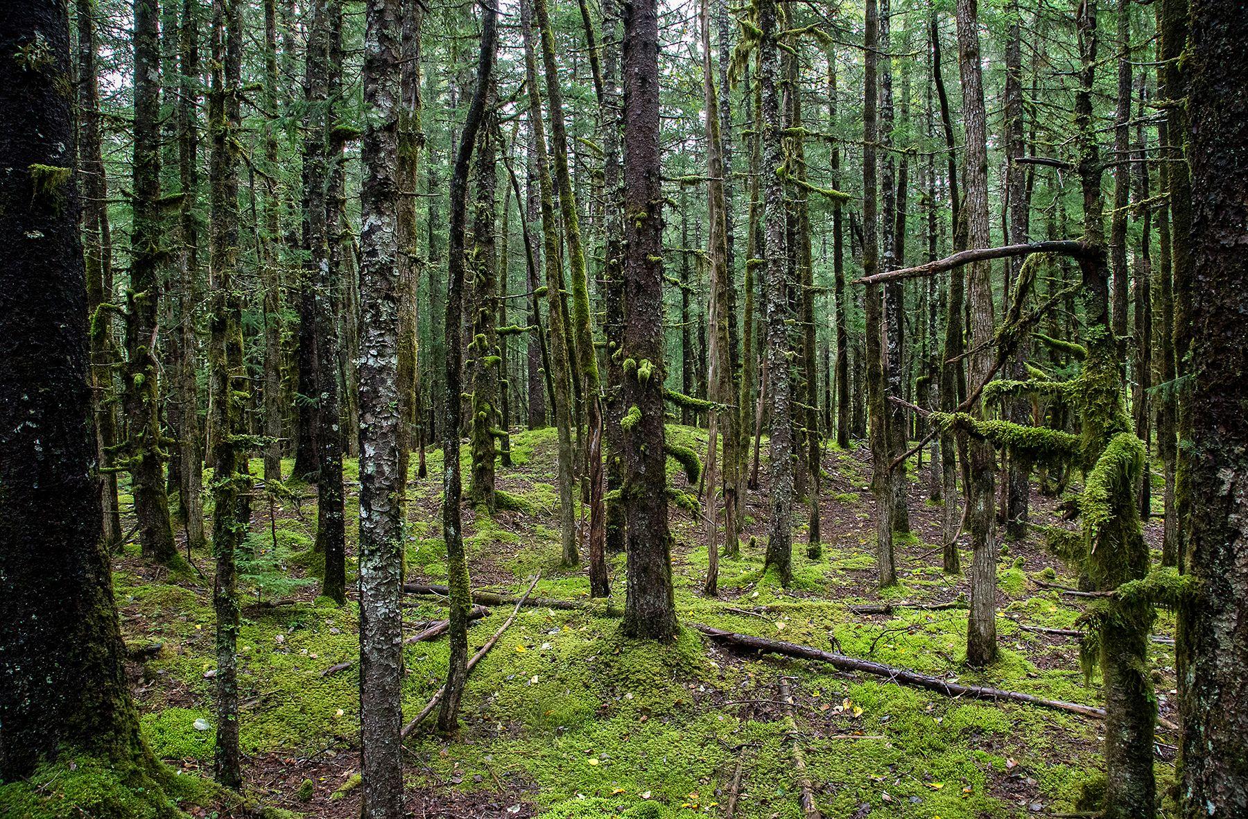 trees1livebooks.jpg