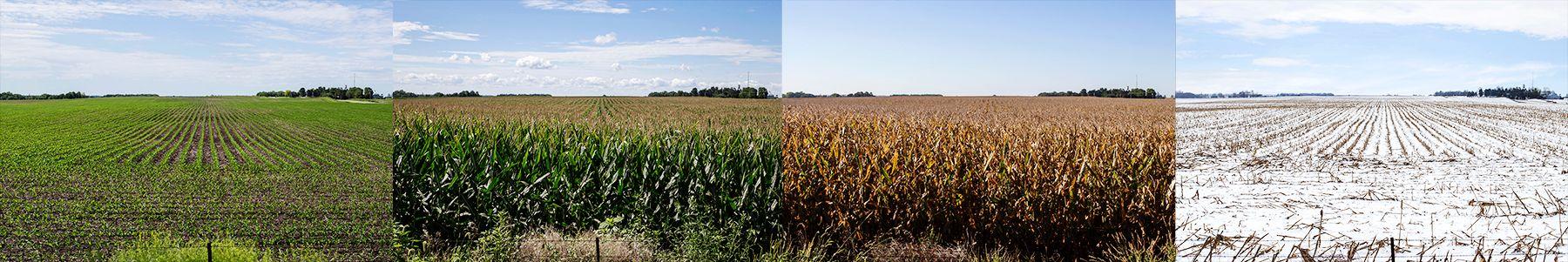 farm1ivebooks.jpg