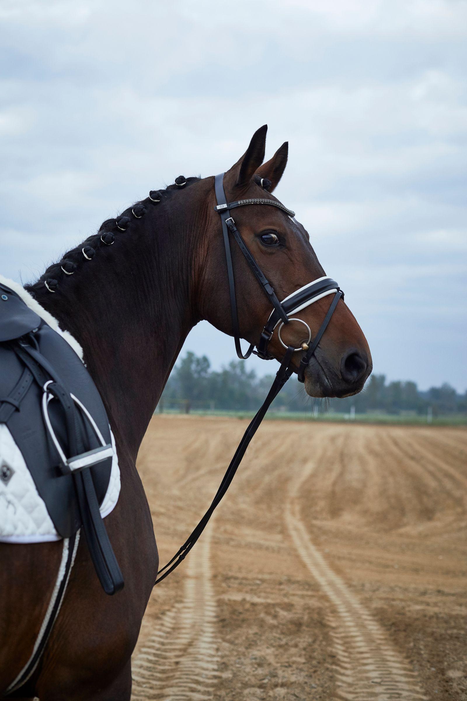 JR_NBH_Dressage_Horse_091318_0072.jpg