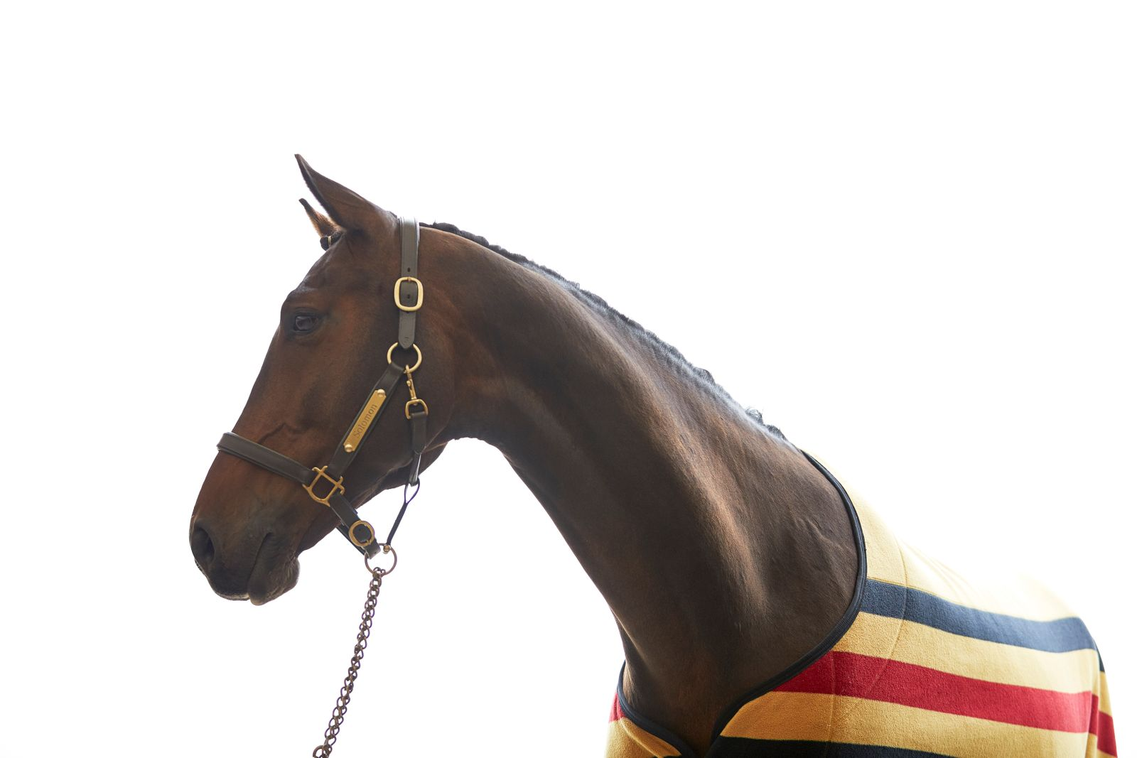JR_NBH_Dressage_Horse_091318_1367.jpg