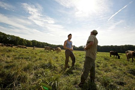 Two Farmers in a Cow Pasture Talking