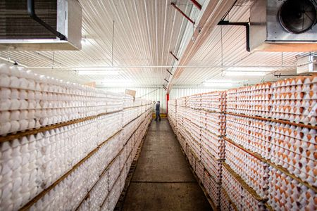 Rows of Eggs In Cartons