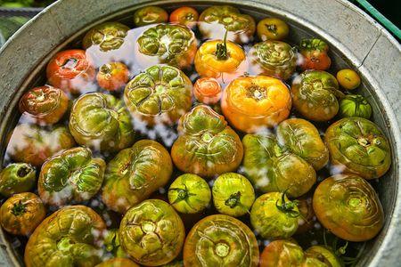 Barrel of Organic Tomatoes
