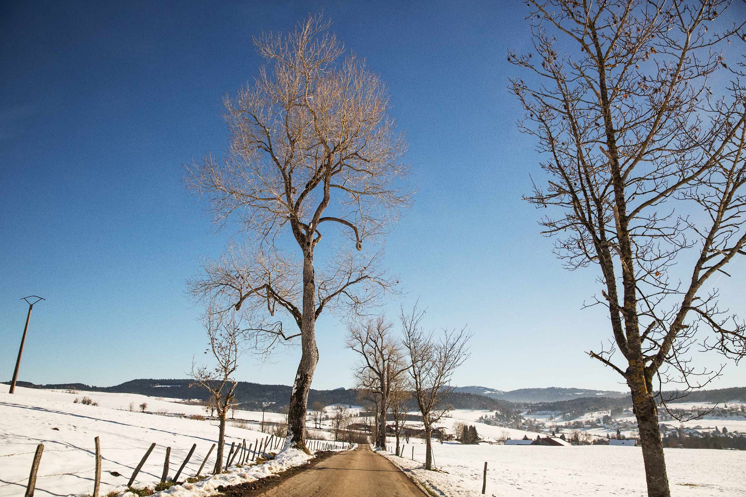 A Leafless Tree Along Side a Road