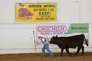 Boy Exhibiting His Cow