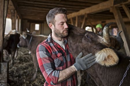 Farmer Hugging Milk Cow