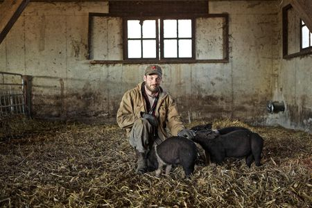 Farmer With Pigs In a Barn