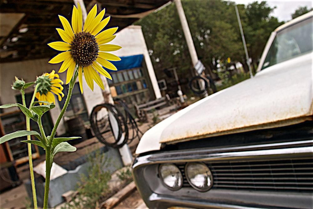 Sunflower Next to an Old Car