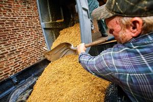 Man Shoveling Spent Grain