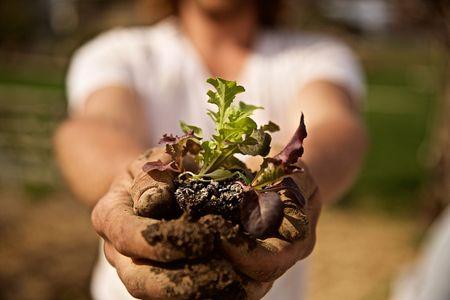 Farmer Holding a Baby Plant toward Camera