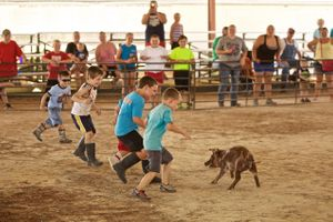A Pig Being Chased By Kids In a Greased Pig Contest