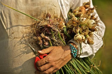 Woman Holding a Bundle of Onions & Garlic